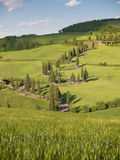 Winding cypress lane in Tuscany Stock Photography