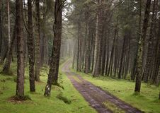 Winding dirt gravel road through sunny green pine forest illuminated by sunbeams through mist stock photography