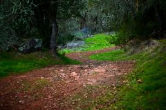 Winding dirt path through a forest Stock Photography