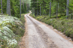 Winding dirt road Stock Image