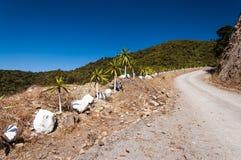 Winding dirt road. Hot winding dirt road and deep blue sky Stock Image