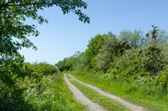 Winding dirt road through a colorful green meadow by spring season royalty free stock images