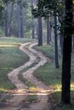 Winding Dirt Road in Indian Tiger Reserve Stock Photos