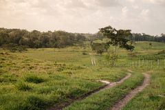 A winding dirt road in a rolling meadow royalty free stock photography