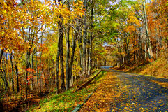 Winding fall road. Beautiful fall leaves on a winding road in the mountains. orange and gold leaves still on the trees and on the ground Stock Image