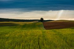 Winding fields, tree and storm stock image