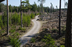 Winding forest dirt road Stock Photo