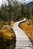 Winding forest path Royalty Free Stock Image