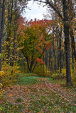 Winding forest path in autumn  forest. Stock Images