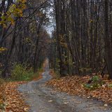 Winding forest path in autumn  forest. Royalty Free Stock Images