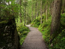 Winding path in lush green forest Stock Photo