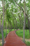Winding forest path Stock Images