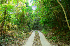 Winding Forest Path Stock Photography