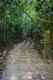 Winding Forest Path Stock Image