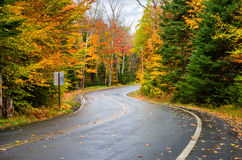 Winding Forest Road Dotted with Fallen Leaves. Wet Winding Forest Road Dotted with Fallen Leaves in Autumn. Adirondacks, upstate New York. Gorgeous Autumn Stock Images