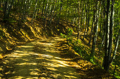 Winding forest road at Homolje mountains Stock Photography