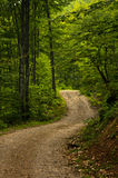 Winding forest road at mountain in east Serbia. Winding forest road at Suva Planina mountain in east Serbia royalty free stock photo