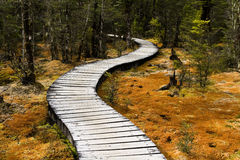Winding forest walkway Royalty Free Stock Images