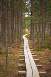 Winding forest wooden path walkway Royalty Free Stock Images