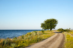 Winding gravel road with lone tree at the coast Stock Photos