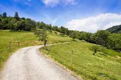 Winding hiking path through green summer landscape Stock Photography