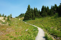 Winding hiking trail in sunshine meadows royalty free stock photos