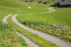 Winding hiking trail in the swiss alps Stock Photos