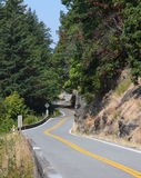 Winding Hillside Road. Through the forest in the summer royalty free stock photography