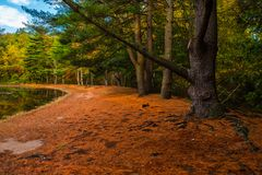 A winding orange path Royalty Free Stock Images