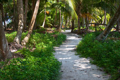 Winding path. A winding sandy path on Lighthouse Caye, Belize. As close to a deserted island as can be stock image