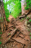 Winding path. Through savannah forest with sun beams Stock Photos