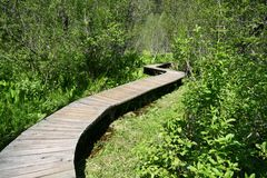 Winding Path. Boardwalk between the lush vegetation stock image