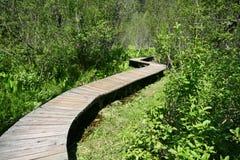 Winding Path. Boardwalk between the lush vegetation Stock Image