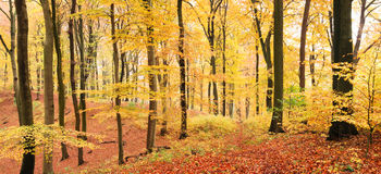 Winding path in autumn forest stock photo