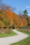 Winding path with fall colors Stock Image
