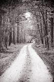 Winding path through the forest Stock Photography