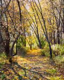 Winding path through the forest with yellow leaves carpeting the trail. Sunlight illuminates the leaves remaining on the trees Stock Photography
