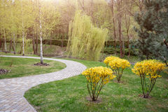 Winding path through the landscaped summer park. Green park outdoor Stock Images