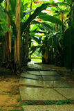 Winding path leading to a secluded spot. Banana trees landscape, vigorous growth, green branches and leaves, marble paved path, winding path leading to a Royalty Free Stock Photography