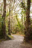 Winding path towards your destiny. Winding Path through Forest in the mountain Royalty Free Stock Photo