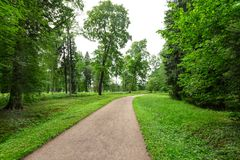 Winding Path through a tranquil verdant park with lawn and tall green trees in summer day for walking and relaxing and Stock Photos