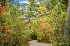 Winding path through vibrant fall forest of colors. Winding walking path through vibrant fall forest of colors. Autumn scene Royalty Free Stock Image
