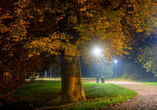 Winding pathway through colorful autumn woodland illuminated at night by street lamps in a tranquil scene Stock Photo