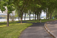 Winding pedestrian path in a park. Royalty Free Stock Image