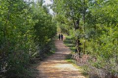 Winding path with two girls walking. Winding red dirt pathway in the forest with two girls walking. Green vegetation sunny day royalty free stock photo