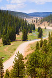 Winding road. View of a winding road through a pine forest Stock Photography