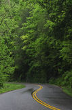 Winding road. Wet winding road with forest on either side Stock Photography