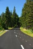 Winding Road along the Maine Coast. A coastal road winding through the pine trees along the Maine Coast Royalty Free Stock Images
