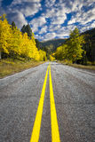 Winding Road Through an Aspen Forest Royalty Free Stock Image