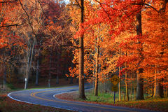 Winding road in autumn trees Royalty Free Stock Image